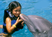 Swim with Dolphins Playa del Carmen