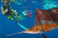 Playa del Carmen Sailfish Tour